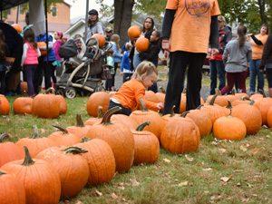 Yardley-Pumpkins